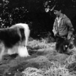 Lassie 'The Bear' episode shots 003