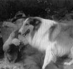 Lassie 'The Bear' episode shots 008