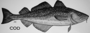 codfish 003